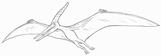 Line drawing of a Pteranodon : Stock Photo