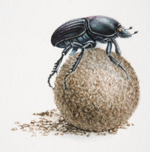 Artwork of dung beetle on top of a dung ball. : Stock Photo