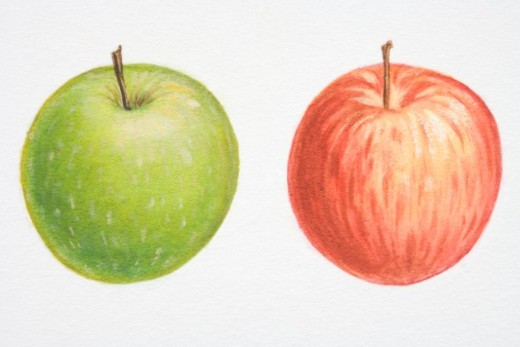 Stock Photo: 4268R-2364 Illustration, Malus, red Apple and green Apple.