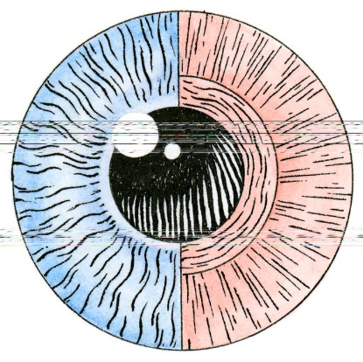Illustration of eye muscle fibres in iris that control contraction and dilation of the pupil : Stock Photo