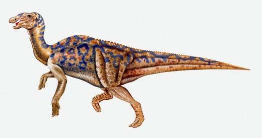 Stock Photo: 4268R-5840 Illustration of Hadrosaurus dinosaur