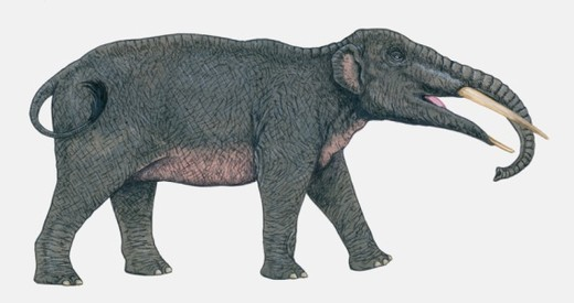Illustration of prehistoric Gomphotherium elephant : Stock Photo