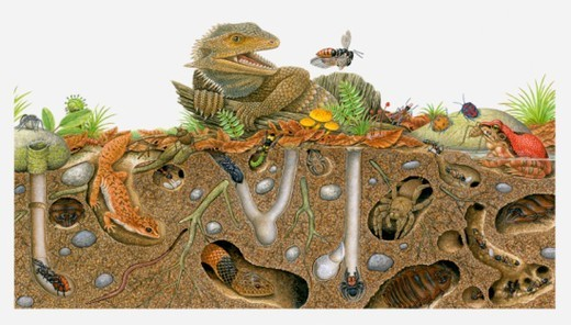 Illustration of animals above ground and in burrows : Stock Photo