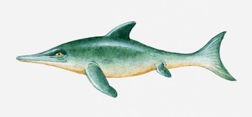 Stock Photo: 4268R-6742 Illustration of prehistoric Ichthyosaur reptile