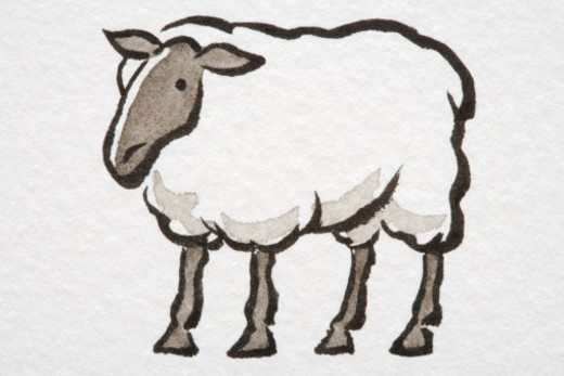 Illustration, standing Sheep, side view. : Stock Photo