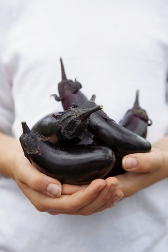 Girl holding harvested aubergines, close up : Stock Photo