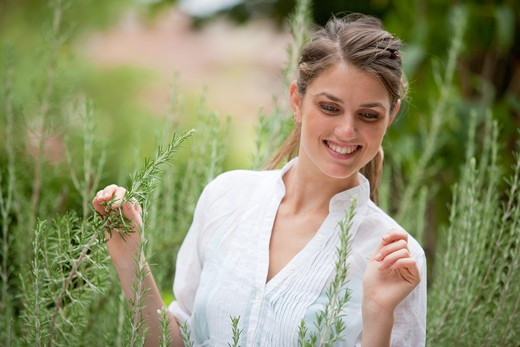 Woman picking rosemary from the garden. : Stock Photo