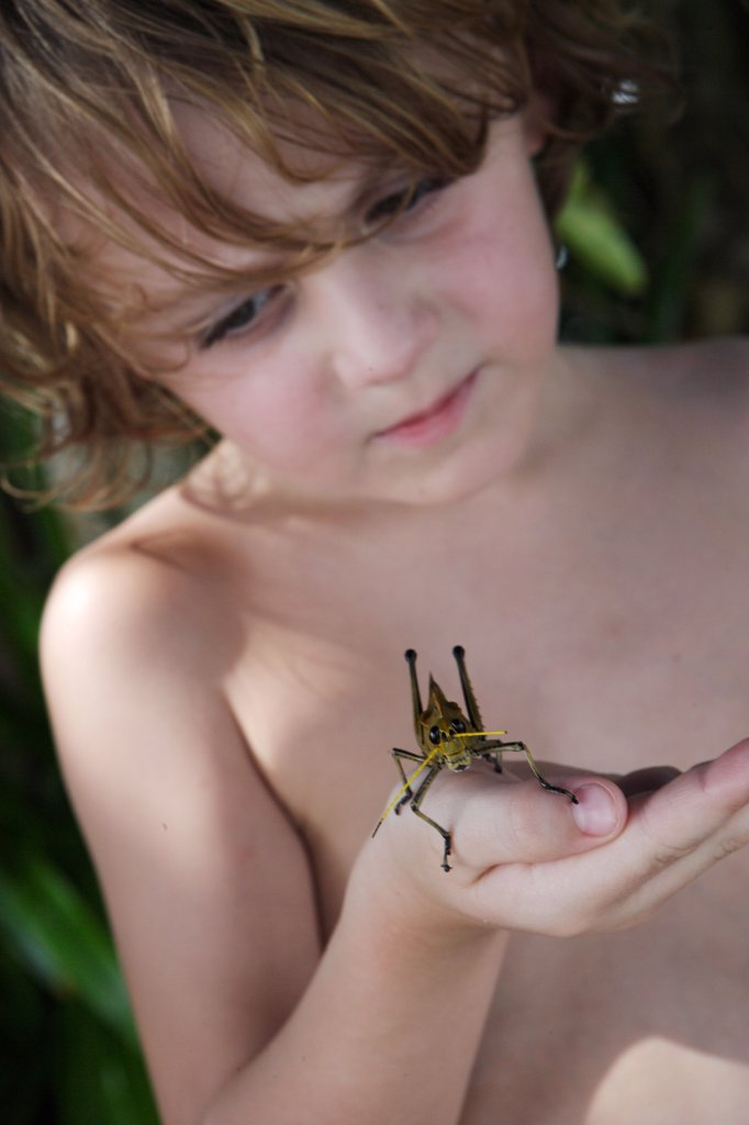 5 years old boy holding a grasshopper in his hand. : Stock Photo