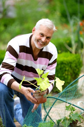 Senior man gardening. : Stock Photo