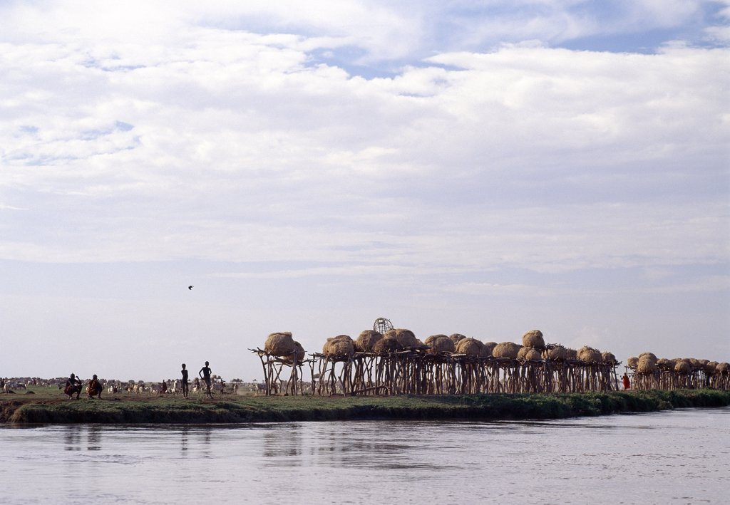 Stock Photo: 4272-10076 A cluster of Dassanech granaries line the banks of the Omo River in front of a large settlement.  The dome shaped granaries are kept high off the ground to protect them from flood damage. The Omo River rises in the Ethiopian Highlands and flows for over 600 miles before discharging its waters into the northern end of Lake Turkana.