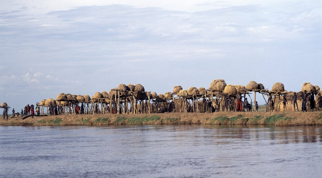 A cluster of Dassanech granaries line the banks of the Omo River.  The dome shaped granaries are kept high off the ground to protect them from flood damage. The Omo River rises in the Ethiopian Highlands and flows for over 600 miles before discharging its waters into the northern end of Lake Turkana. : Stock Photo