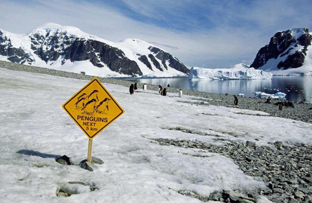 Stock Photo: 4272-1065 Antarctica, Errera Channel, Danco Island. Gentoo penguins (pygoscelis papua) & tourists fun sign.