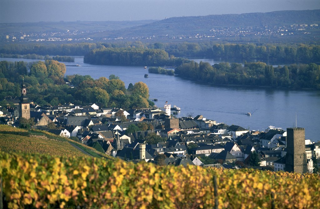 Stock Photo: 4272-12044 Rudesheim, Rhine, Hesse, Germany