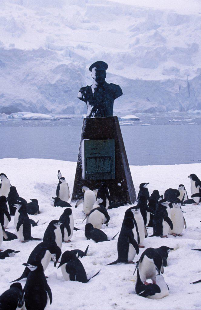 Antarctica, Elephant Island, Point Wild. Chinstrap penguins (Pygoscelis antarctica) & memorial at Shackleton's camp site : Stock Photo