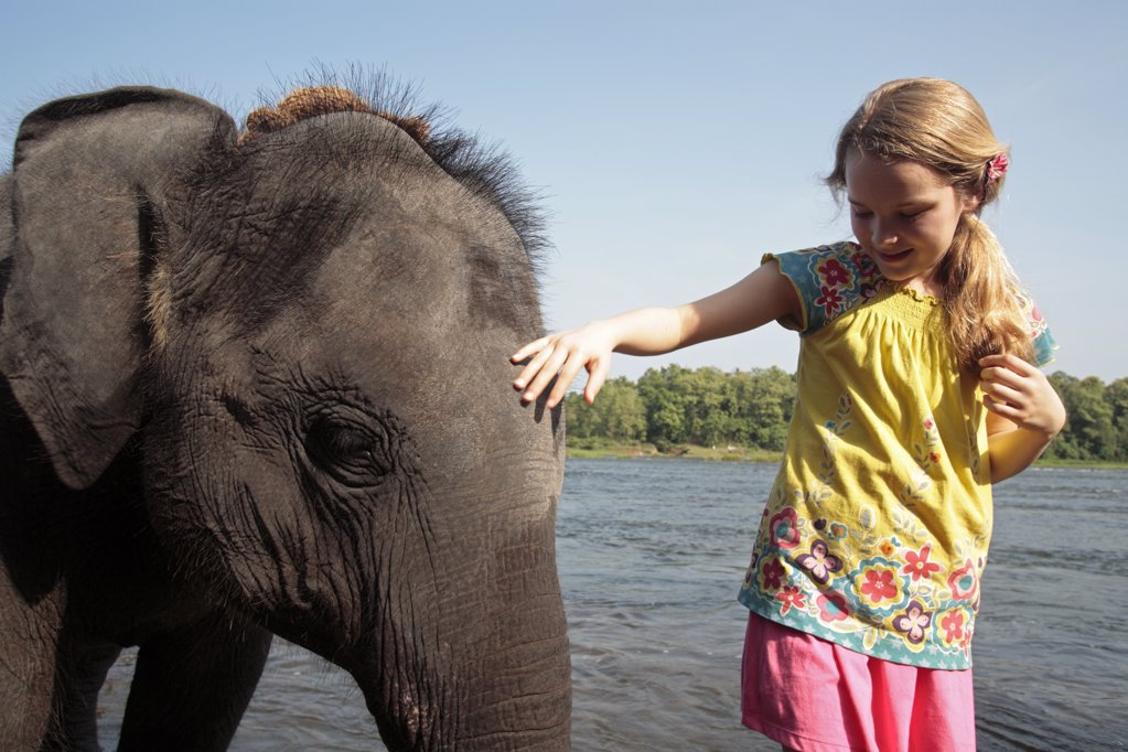 India, South India, Kerala. Young girl pats an orphan elephant from Kodanad Elephant Sanctuary during its daily bath in the River Periyar.  (MR) : Stock Photo