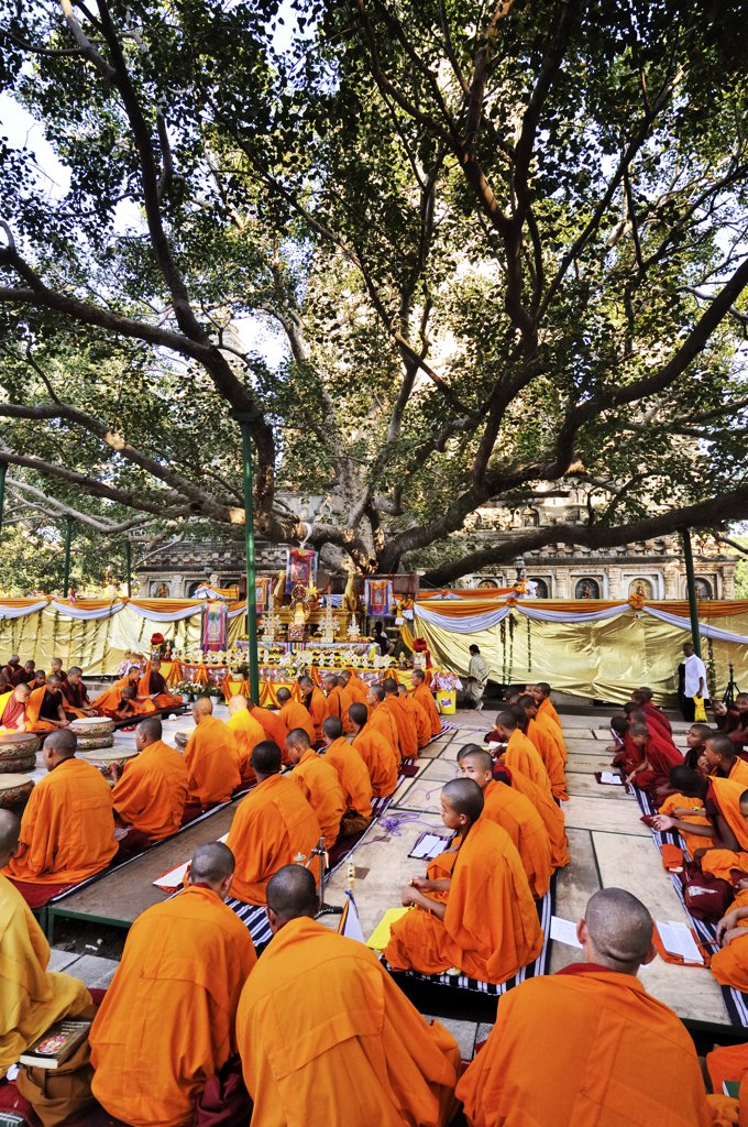 Stock Photo: 4272-14377 Tibetan monks in Bodhgaya, praying under the sacred Buddha banyan tree. It was here that the Buddha had the enlightenment. India