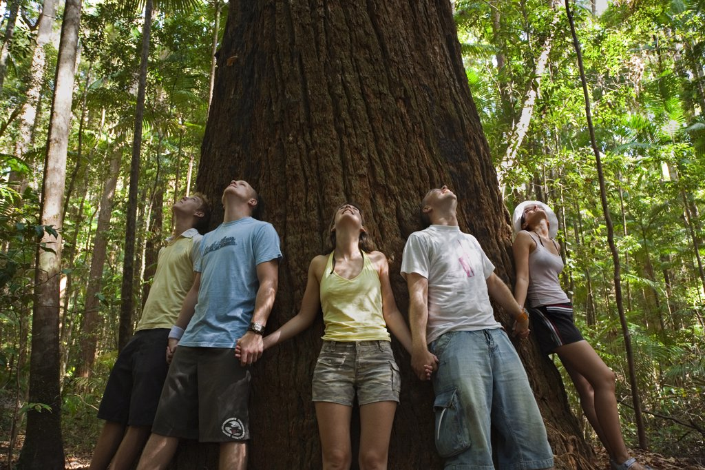 Australia, Queensland, Fraser Island. Visitors ring a giant Satinay tree.  The Satinays of Fraser Island were once highly prized timber and were used as pylons in the construction of the Suez canal. : Stock Photo