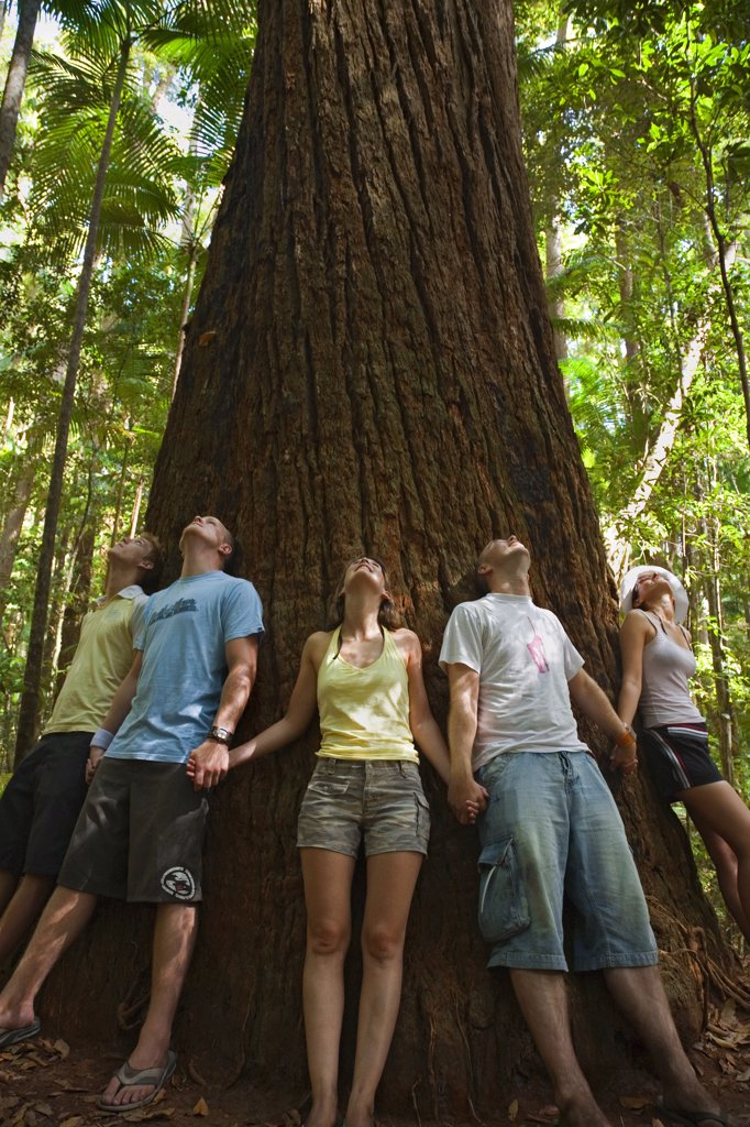 Stock Photo: 4272-1458 Australia, Queensland, Fraser Island. Visitors ring a giant Satinay tree.  The Satinays of Fraser Island were once highly prized timber and were used as pylons in the construction of the Suez canal.