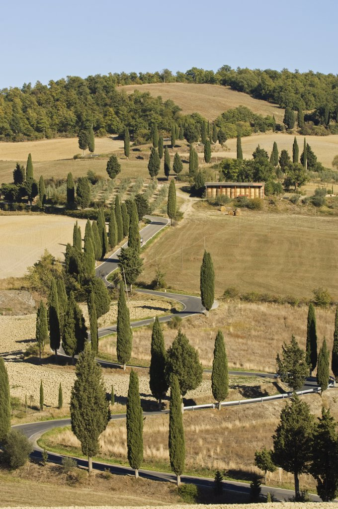 Stock Photo: 4272-15065 Italy, Tuscany, Montichiello. Cypress trees line a winding country road outside the village of Montichiello in Val d'Orcia.