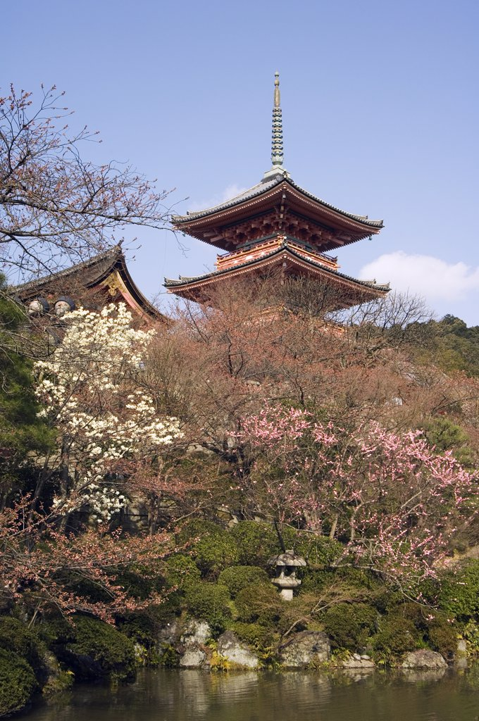 Stock Photo: 4272-15560 Kiyomizudera temple, red pagoda, spring cherry trees around pond