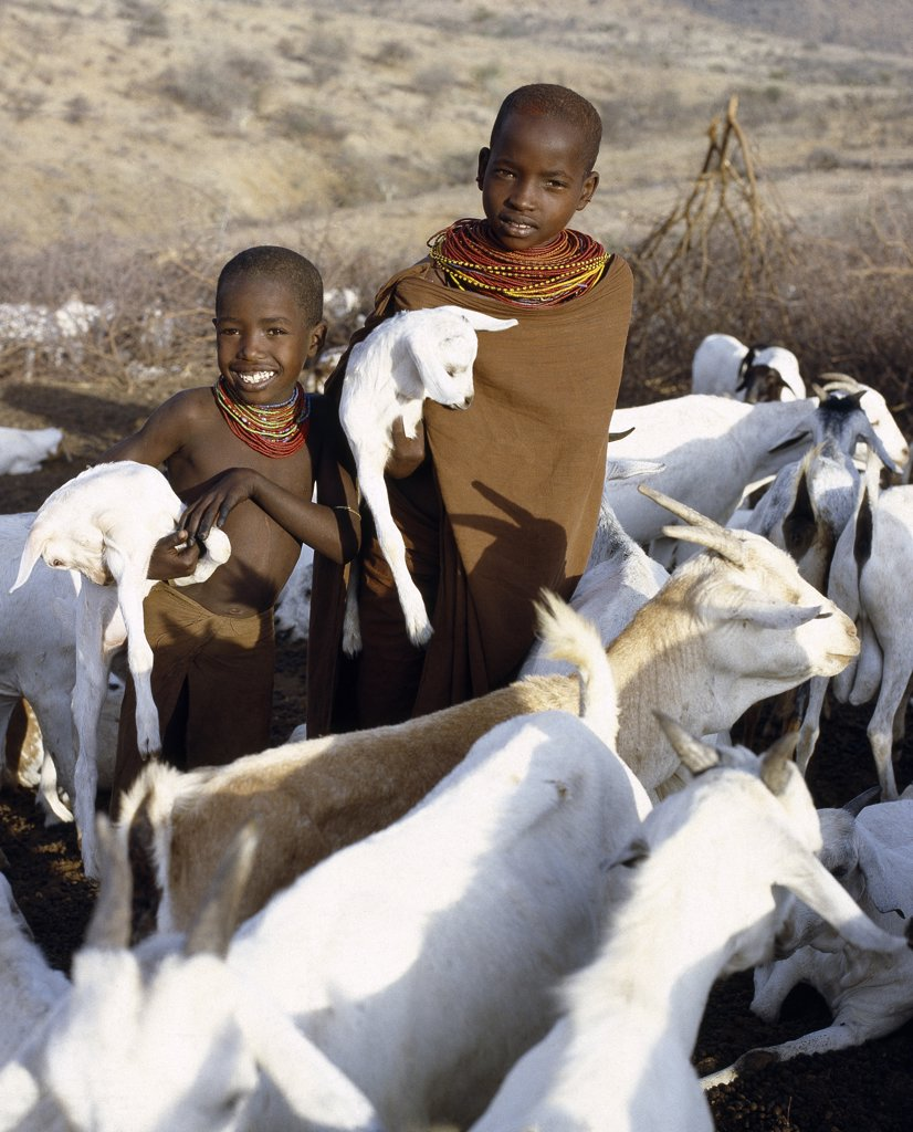 Stock Photo: 4272-16202 In the early morning,  young Samburu girls take kids to their mothers. They will then milk the nanny goats leaving half the milk for the kids.  Only women and children milk goats although every member of the family will drink the milk.