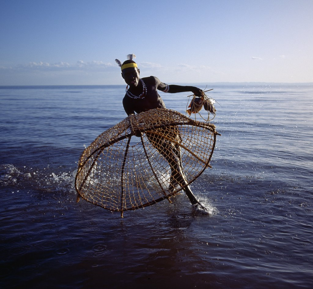 With his traditional fishing basket poised, a Turkana fisherman rushes to catch a tilapia in the shallow waters of Lake Turkana.  The conical shaped basket, three to four feet wide at the mouth and made from pliable sticks and twisted doum palm fronds, has a small flap at the top of the cone  through which trapped fish are removed. : Stock Photo
