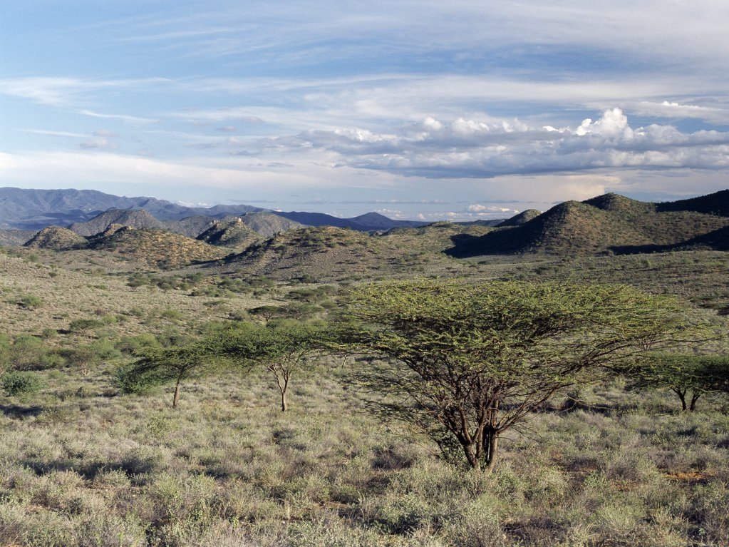 Stock Photo: 4272-16726 Semi-arid thorn scrub best describes the vegetation of northern Samburuland where semi-nomadic pastoralists eke out a living from an unforgiving land.  The region is characterised by grand vistas, poor soil and an unreliable rainfall. The Ndoto Mountains can be seen in the far distance.
