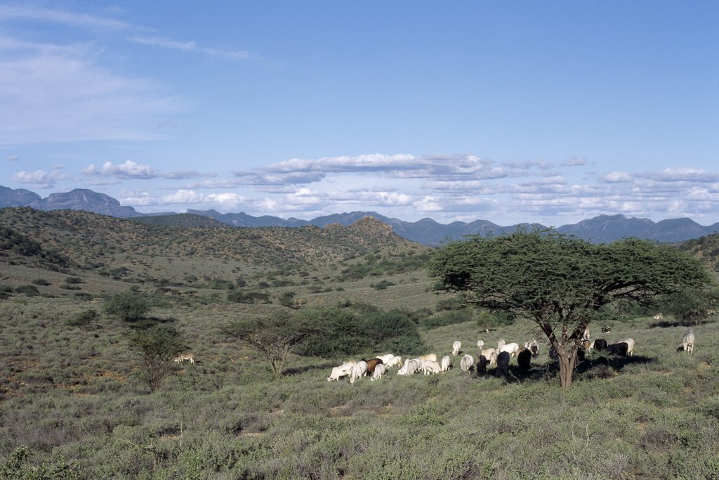 Semi arid thorn scrub best describes the vegetation of northern Samburuland where semi nomadic pastoralists eke out a living from an unforgiving land.  The region is characterised by grand vistas, poor soil and an unreliable rainfall. : Stock Photo