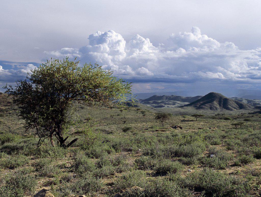 the unforgiving environment of northern kenya