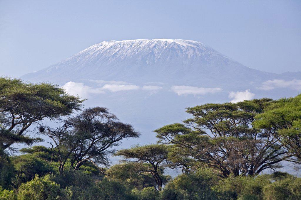 Stock Photo: 4272-17408 Kenya, Amboseli, Amboseli National Park. Majestic Mount Kilimanjaro towering above large acacia trees (Acacia tortilis) in Amboseli National Park.