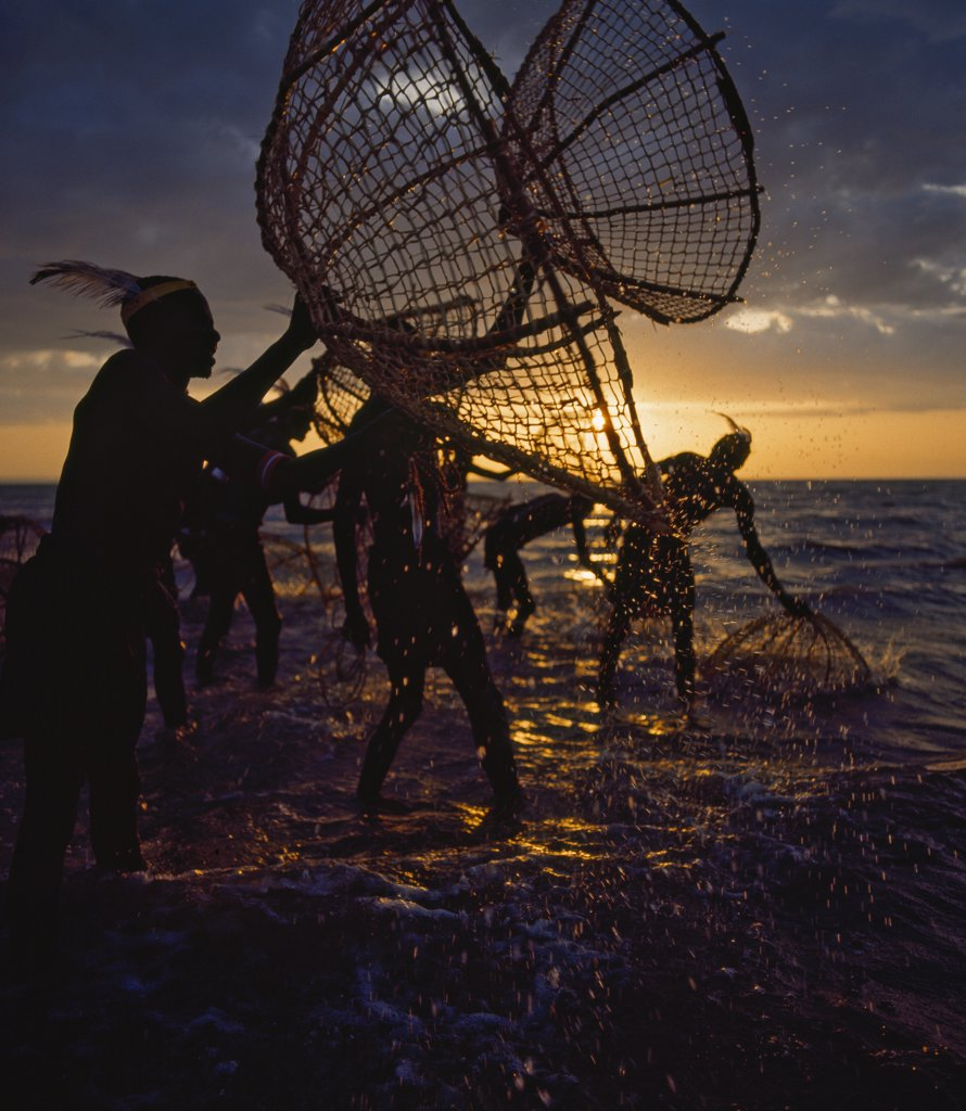Stock Photo: 4272-17717 Kenya, Lake Turkana, Eliye Sprinjgs. Turkana fishermen with traditional wicker baskets fish for tilapia in the shallow waters of Lake Turkana.