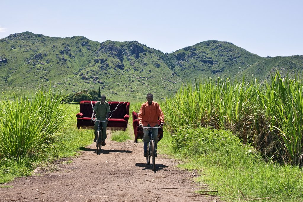 Stock Photo: 4272-17972 Kenya, Kisumu District. Two friends cycle home through sugar cane fields with a sofa set which they bought from a local furniture maker and upholsterer.