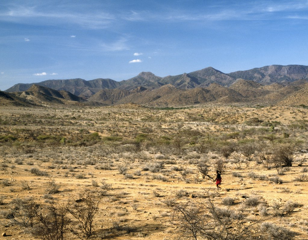 A man walks purposefully through semi-arid thorn scrub country with the rugged Ndoto Mountains rising in the background. : Stock Photo