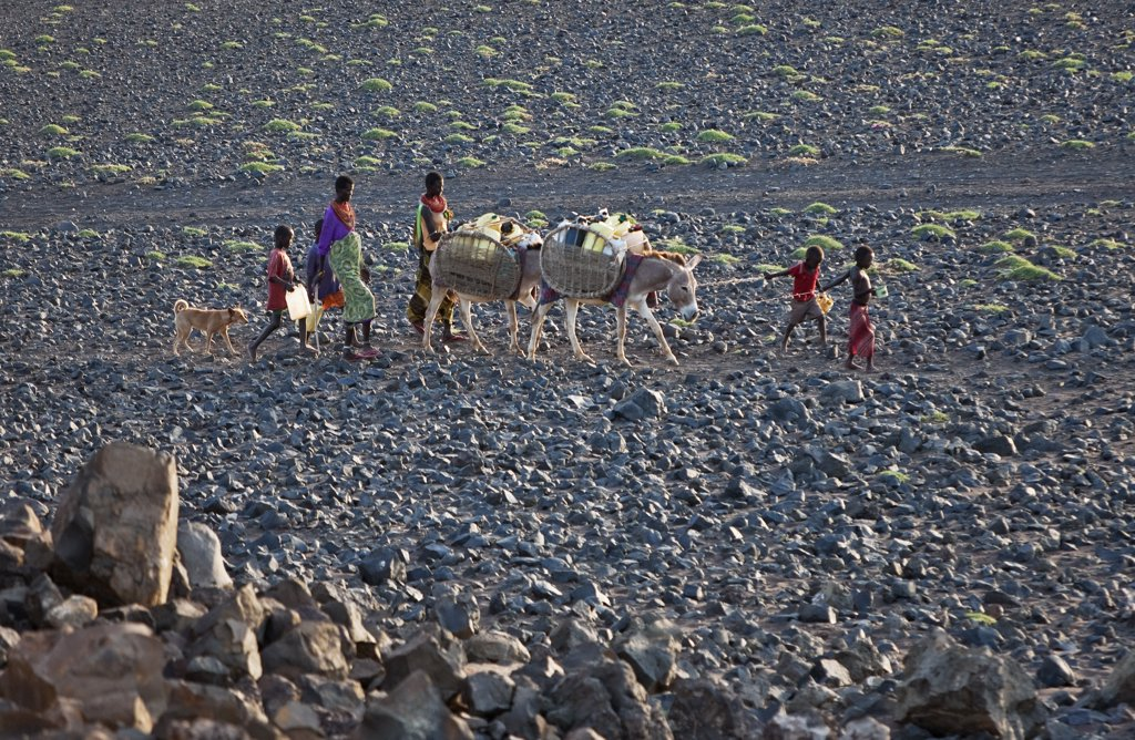 El Molo women and children set off early in the morning with their donkeys to fetch water from a spring several hours journey away. : Stock Photo