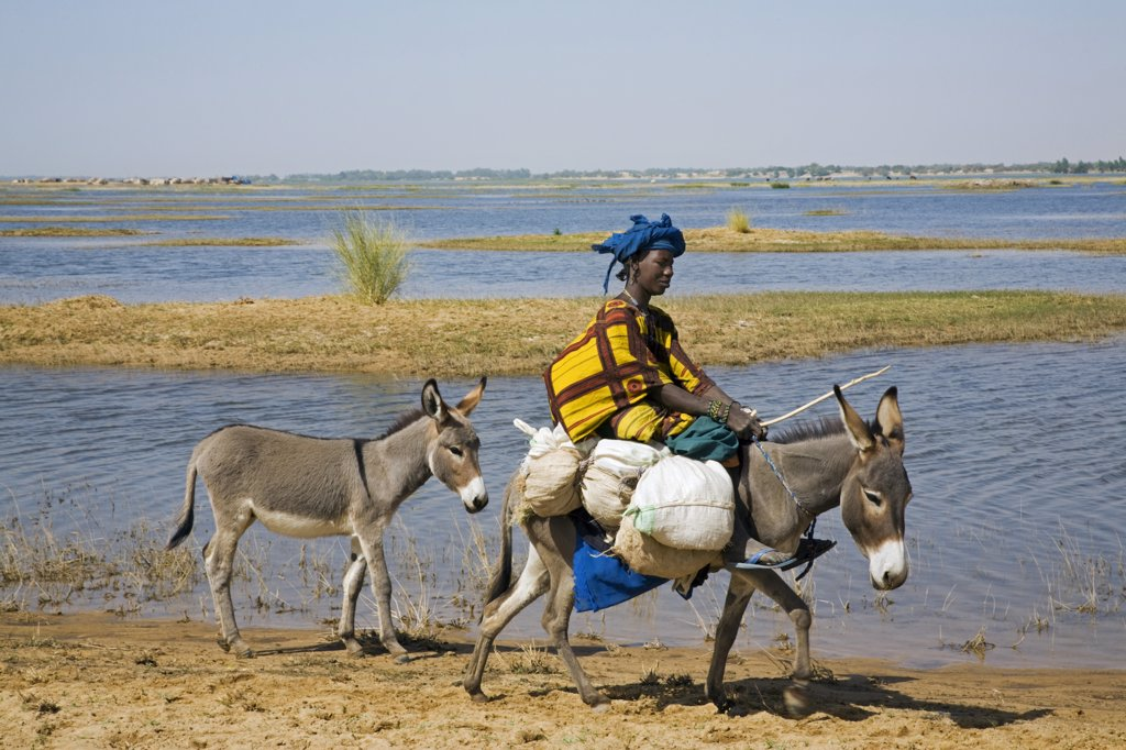 Stock Photo: 4272-20594 Mali, Timbuktu. A Bozo woman rides her donkey along the banks of the Niger River having bought provisions in the local market at Korioum_.