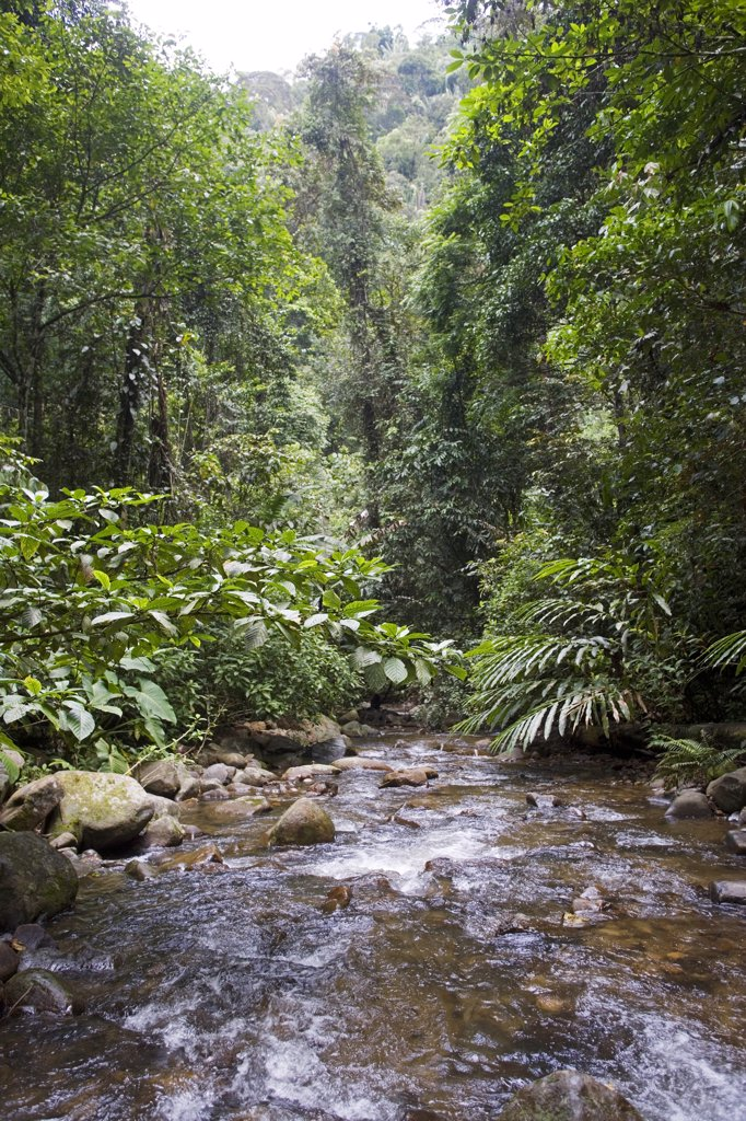Trekking and Hiking in the rainforests of Borneo, a river crossing in the Crocker Range, Sabah : Stock Photo