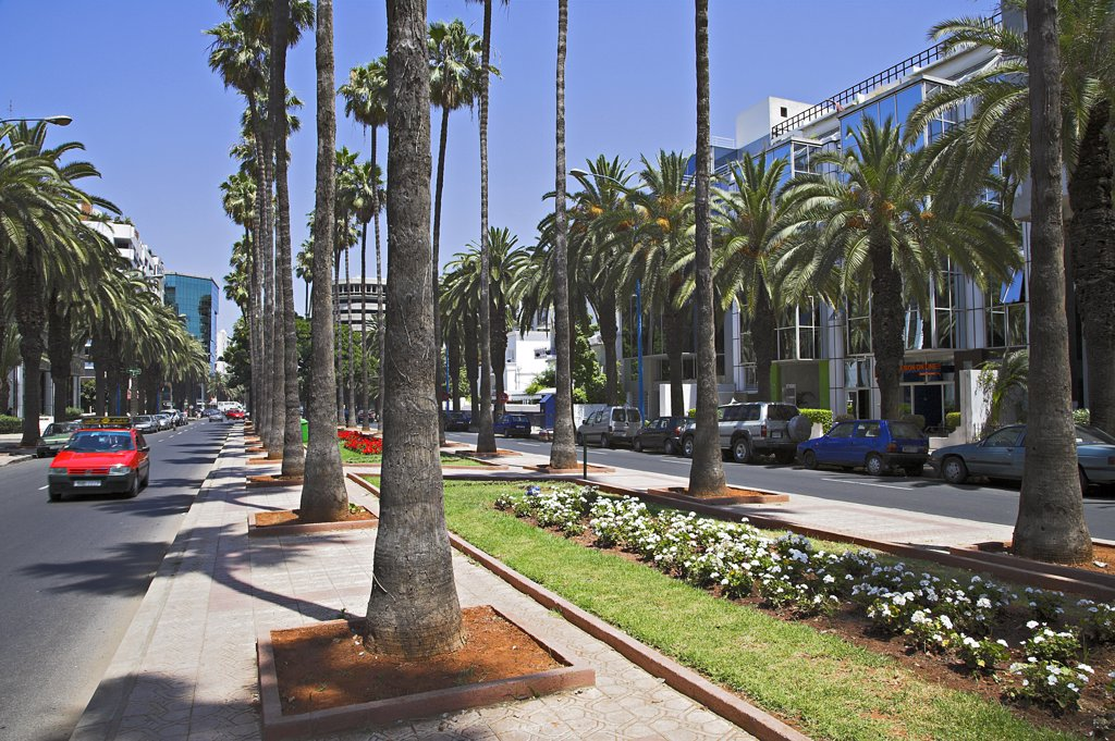 The Boulevard de Rachidi is typical of the wide tree lined streets in the smart Lusitania district of Casablanca. : Stock Photo