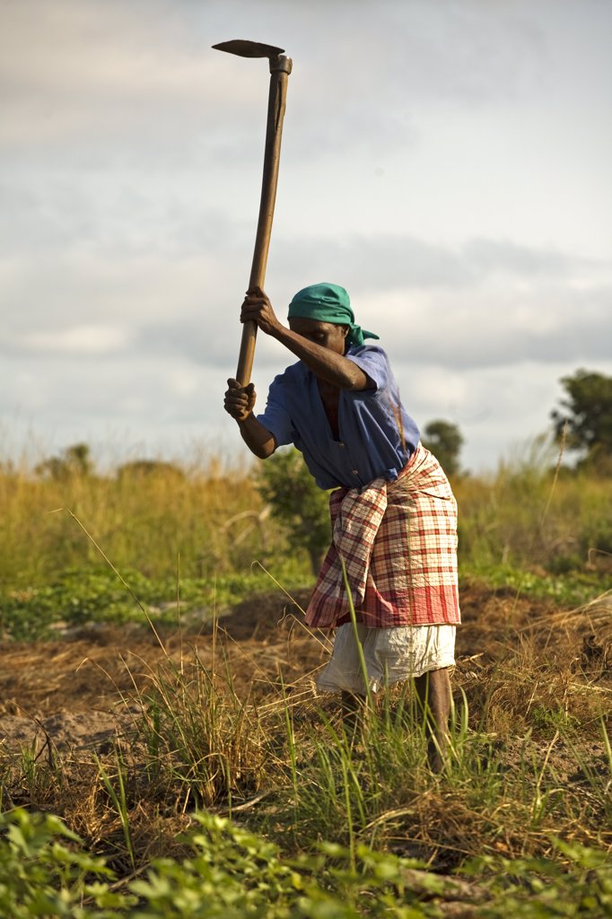 Stock Photo: 4272-21982 Mozambique, Inhaca Island. An Mozambican woman works on her land with a traditional farming tool; the hoe. She is preparing the ground for growing mandioca, a common staple food found on the island. Inhaca is the largest island in the Gulf of Maputo, lying 24km from the mainland. Inhaca is the most accessible of Mozambiques offshore islands, and ideally situated for a short break from Maputo.