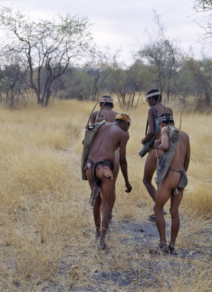 Stock Photo: 4272-23005 A band of Kung hunter gatherers makes a stealthy approach towards an antelope, their bows and arrows at the ready.The Kung live in the harsh environment of a vast expanse of flat sand and bush scrub country straddling the Namibia Botswana border.