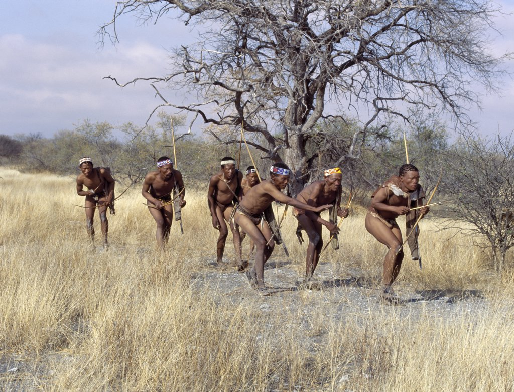 A band of Kung hunter gatherers makes a stealthy approach towards an antelope, their bows and arrows at the ready.The Kung live in the harsh environment of a vast expanse of flat sand and bush scrub country straddling the Namibia Botswana border. : Stock Photo