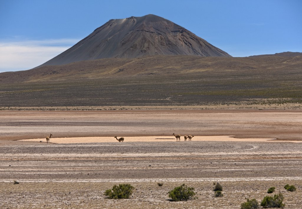 Stock Photo: 4272-25897 Peru, Vicunas on the salt flats of the seasonal Laguna de Salinas beneath El Misti volcano near Arequipa.