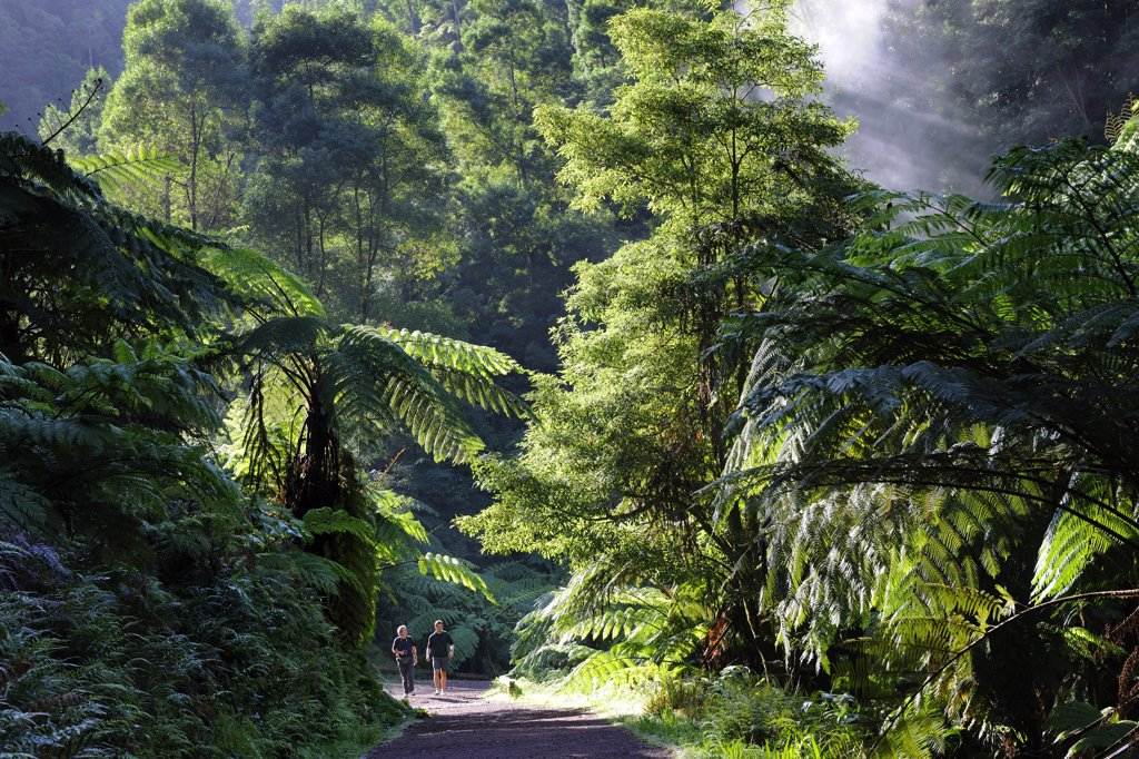 Stock Photo: 4272-26587 Two men walking along the exotic forest of Caldeira Velha, near Ribeira Grande. Sao Miguel, Azores islands, Portugal