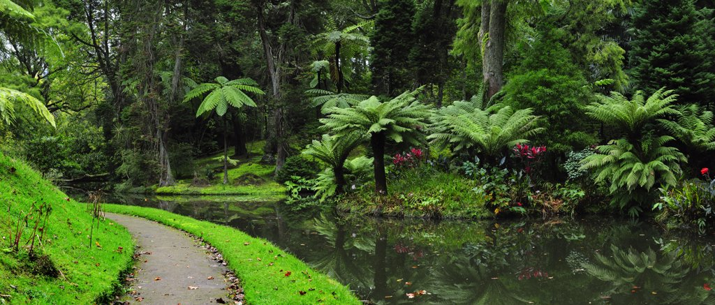 Stock Photo: 4272-26597 Founded in the 18th century, the Terra Nostra garden at Furnas is one of the most beautiful and exotic  gardens in the world. Sao Miguel, Azores islands, Portugal