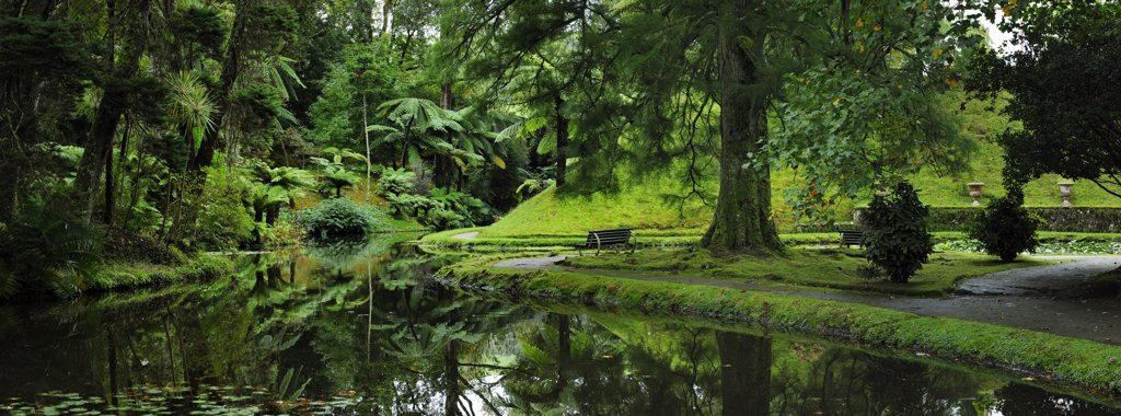 Stock Photo: 4272-26600 Founded in the 18th century, the Terra Nostra garden at Furnas is one of the most beautiful and exotic  gardens in the world. Sao Miguel, Azores islands, Portugal