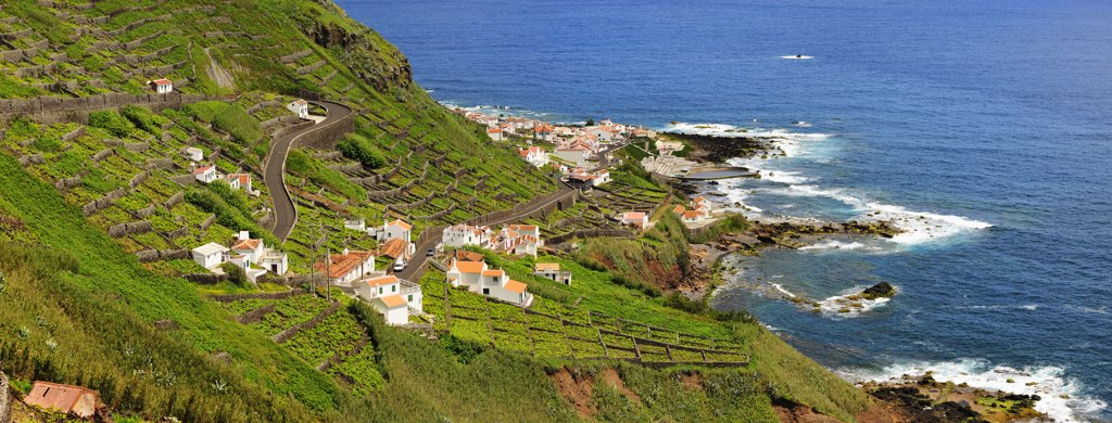 Terraced vineyards at the little town of Maia. Santa Maria, Azores islands, Portugal : Stock Photo