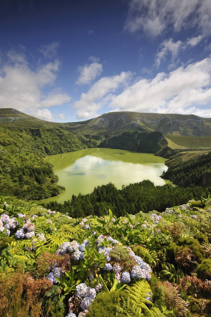 Stock Photo: 4272-26756 Crater lake with hydrangeas in the foreground, Caldeira Funda. Azores islands, Portugal