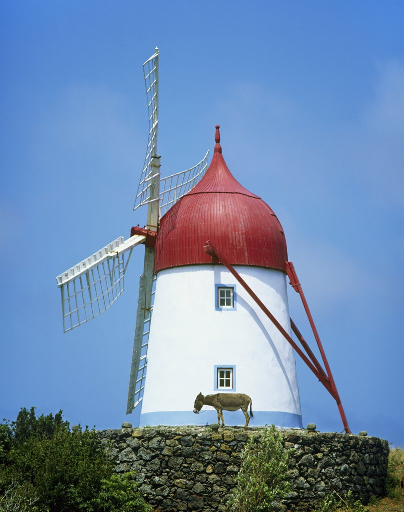 A traditional windmill in Guadalupe. Graciosa, Azores islands, Portugal : Stock Photo