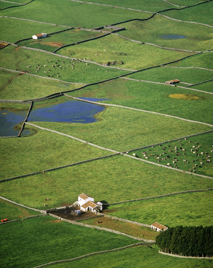 Stock Photo: 4272-26812 Pasture fields at Vale da Achada. Terceira, Azores islands, Portugal