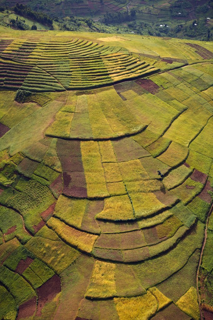 Stock Photo: 4272-27639 Rwanda. In the land of a thousand hills population density is at it's highest in africa. Terracing is used to maximise the area that can be farmed.