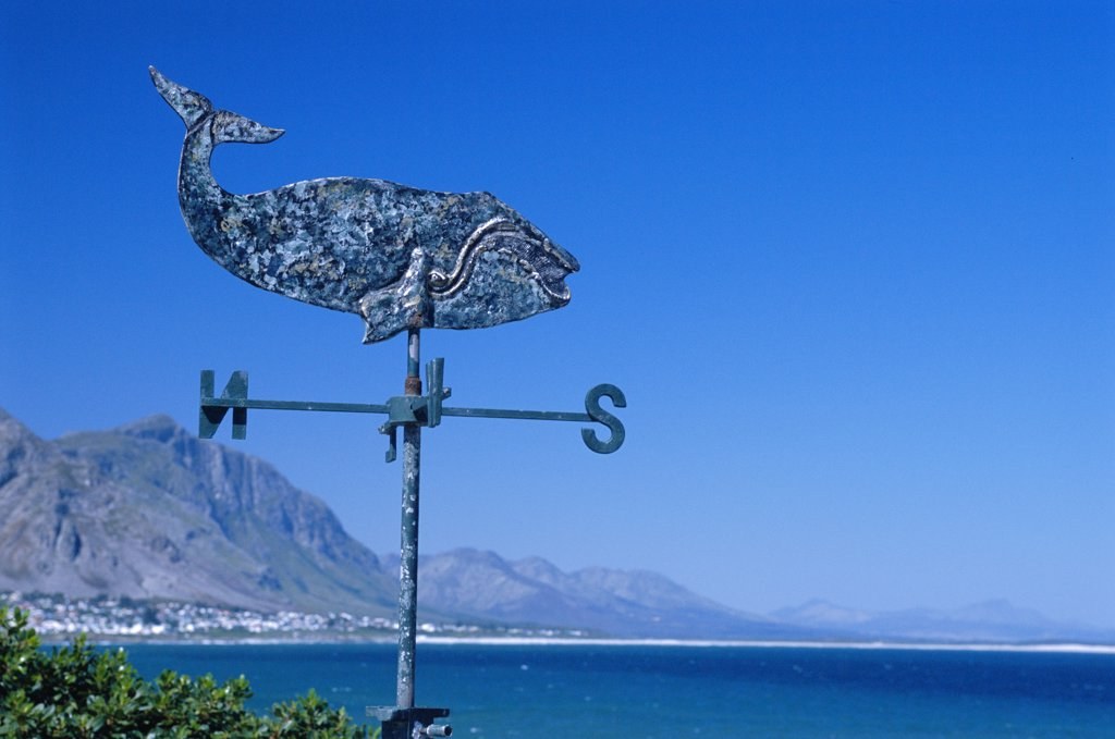 Stock Photo: 4272-27830 A weathervane in the shape of a whale on a house overlooking Walker Bay